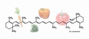 Risultato immagine per carotenoidi