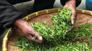 Le principali tipologie di tè cinese - Giuntistore